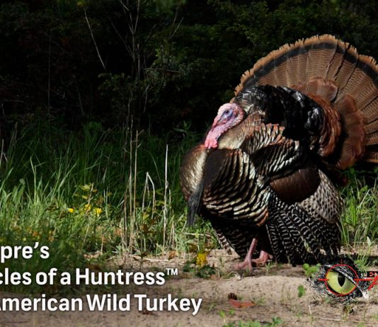Chronicles of a Huntress Wild turkeys conservation