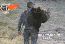 in the zone turkey hunting episode 2