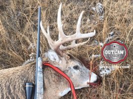 5 whitetail tips